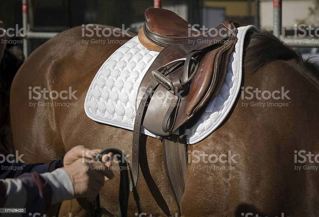 Preparing the horse stock photo