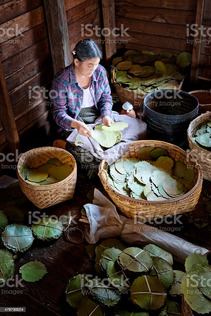 Preparing Tobacco Leaves at a Cigar Factory stock photo