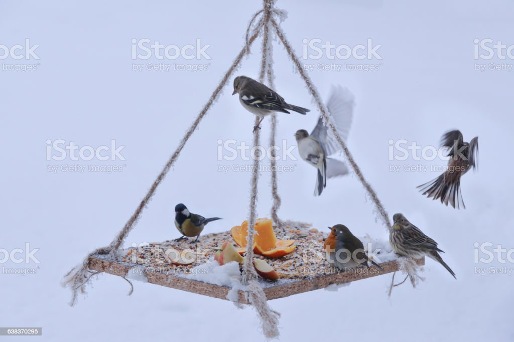 presentation prepared for wild birds stock photo