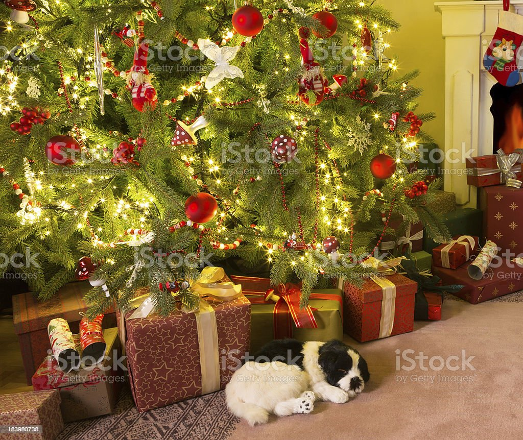 Presents under the christmas tree royalty-free stock photo
