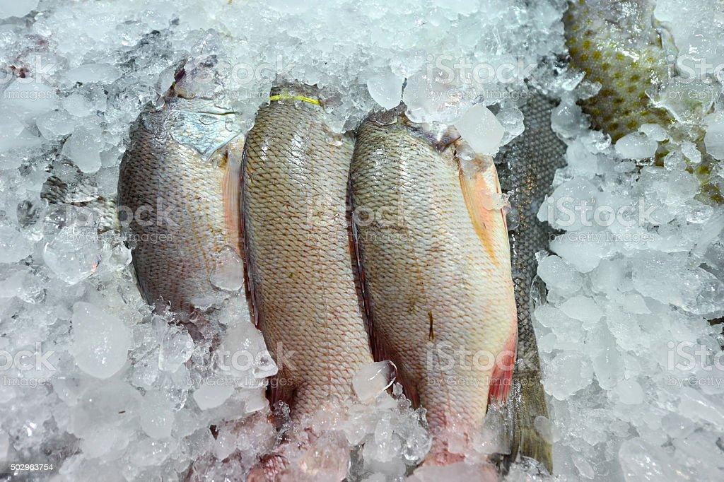 Preservation Frozen Sea Fish stock photo