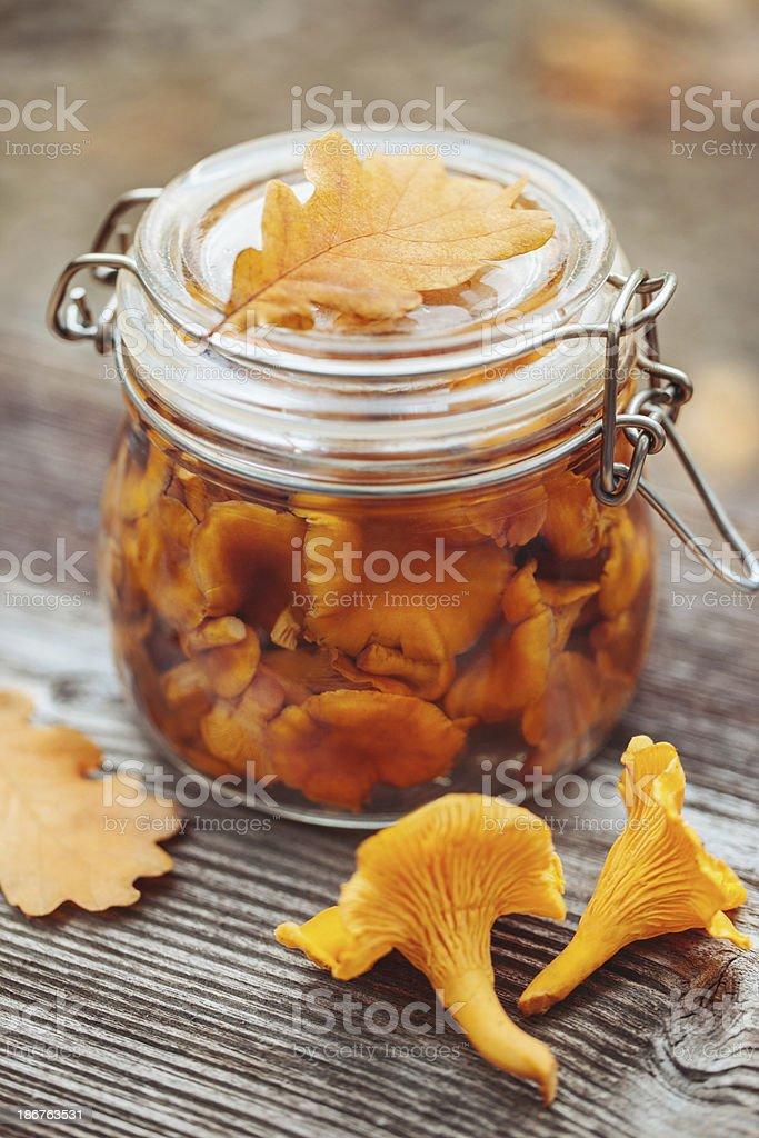 Preserved chanterelles stock photo