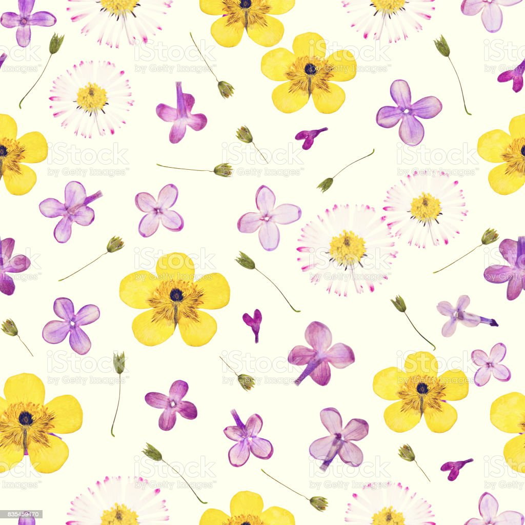 Pressed and dried flowers pattern stock photo