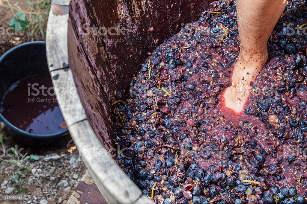 Pressing grapes stock photo