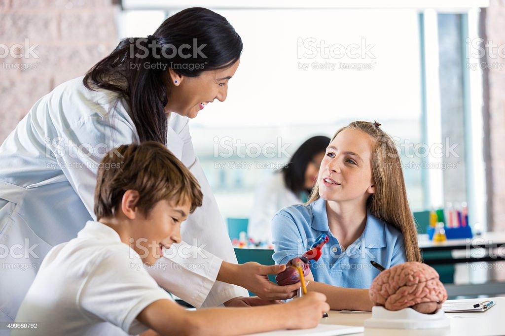 Preteen girl studying human brain in science class stock photo