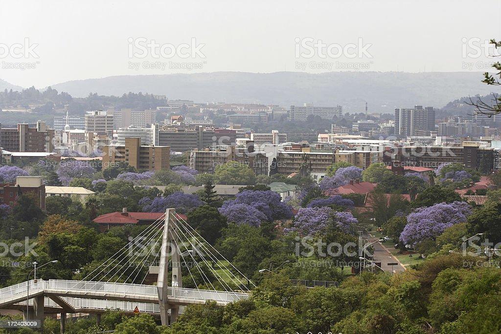 Pretoria city South Africa with Jacarandas stock photo