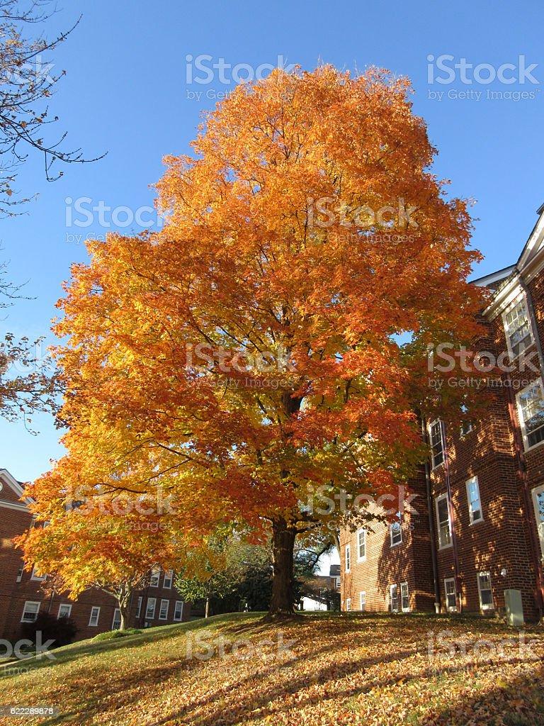 Prettiest Tree in the Neighborhood stock photo