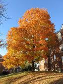 Prettiest Tree in the Neighborhood