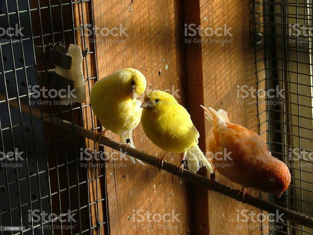 pretty bird stock photo
