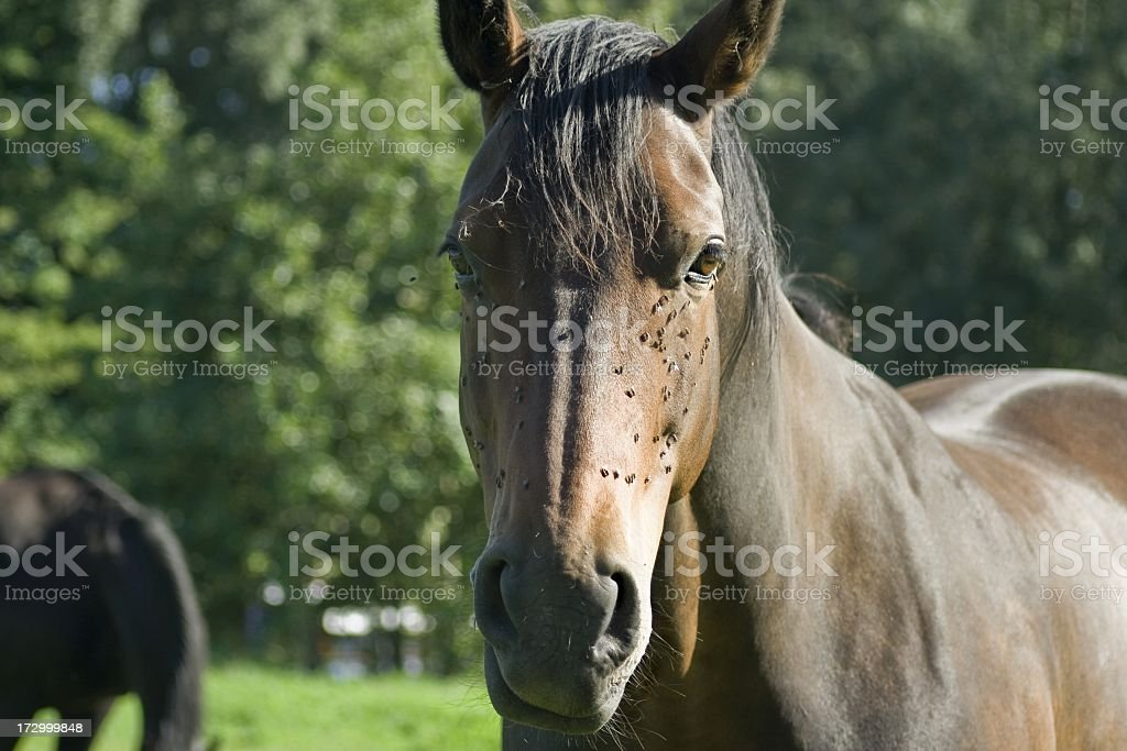 Pretty brown horse stock photo