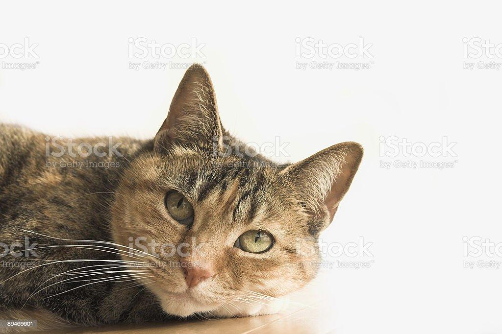 Śliczny Kot zbiór zdjęć royalty-free
