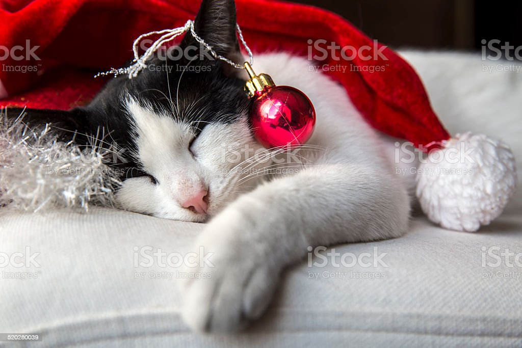 Pretty cat with Christmas decorations stock photo