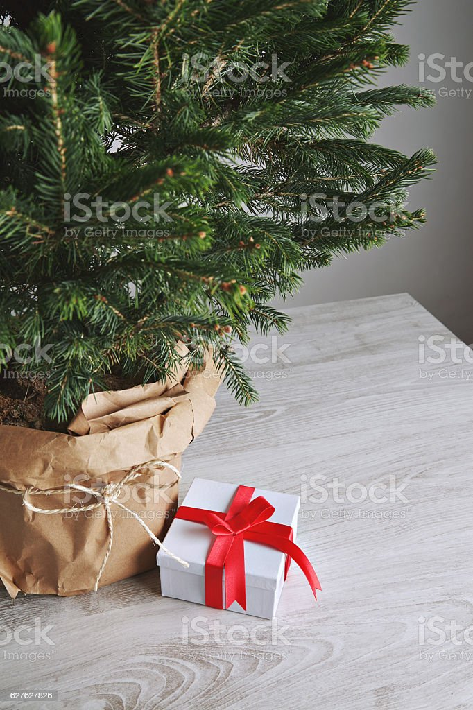Pretty Christmas tree with a present stock photo