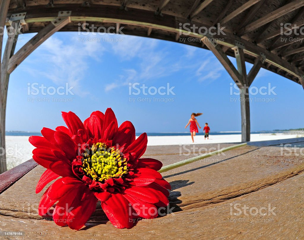 Pretty flower in beach shelter royalty-free stock photo