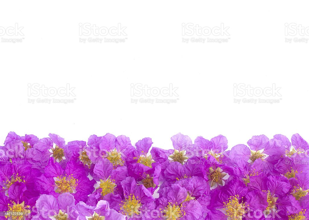 Pretty frame from purple flowers stock photo