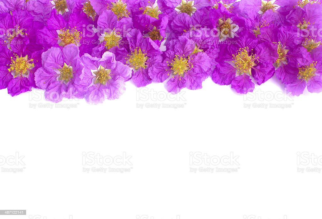 Pretty frame from purple flowers royalty-free stock photo