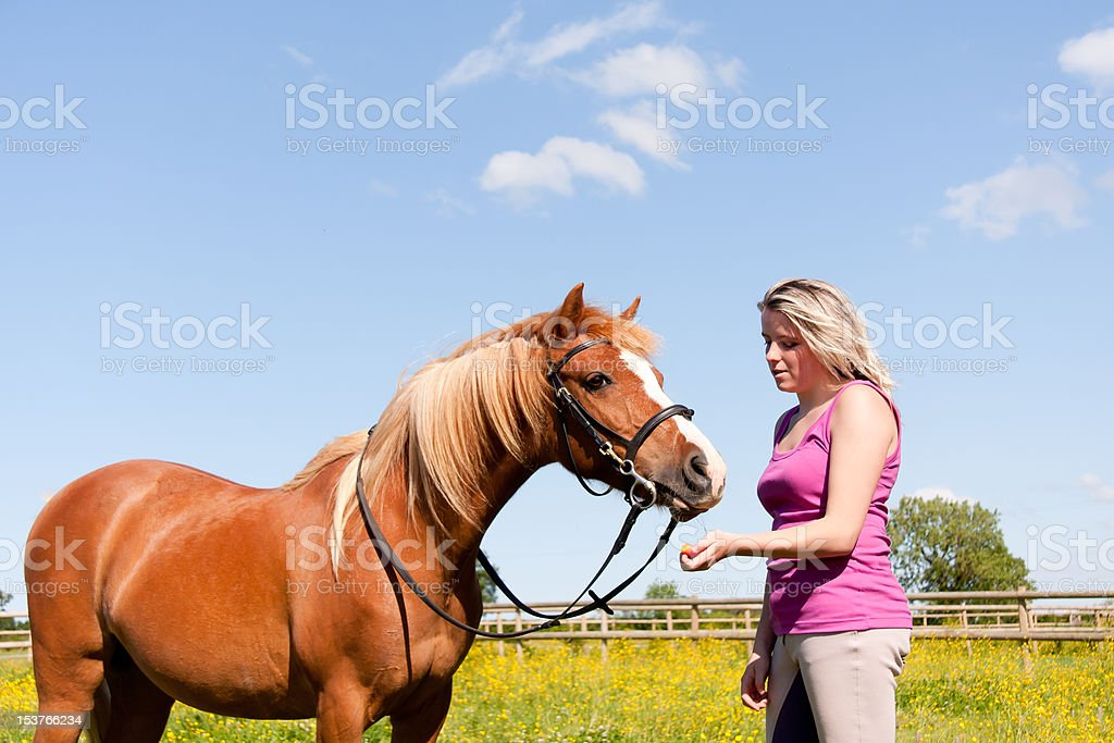 Pretty girl hand feeds shiny chestnut pony on summers day. royalty-free stock photo