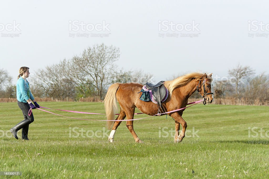 Pretty girl lunging her pony in english countryside. royalty-free stock photo