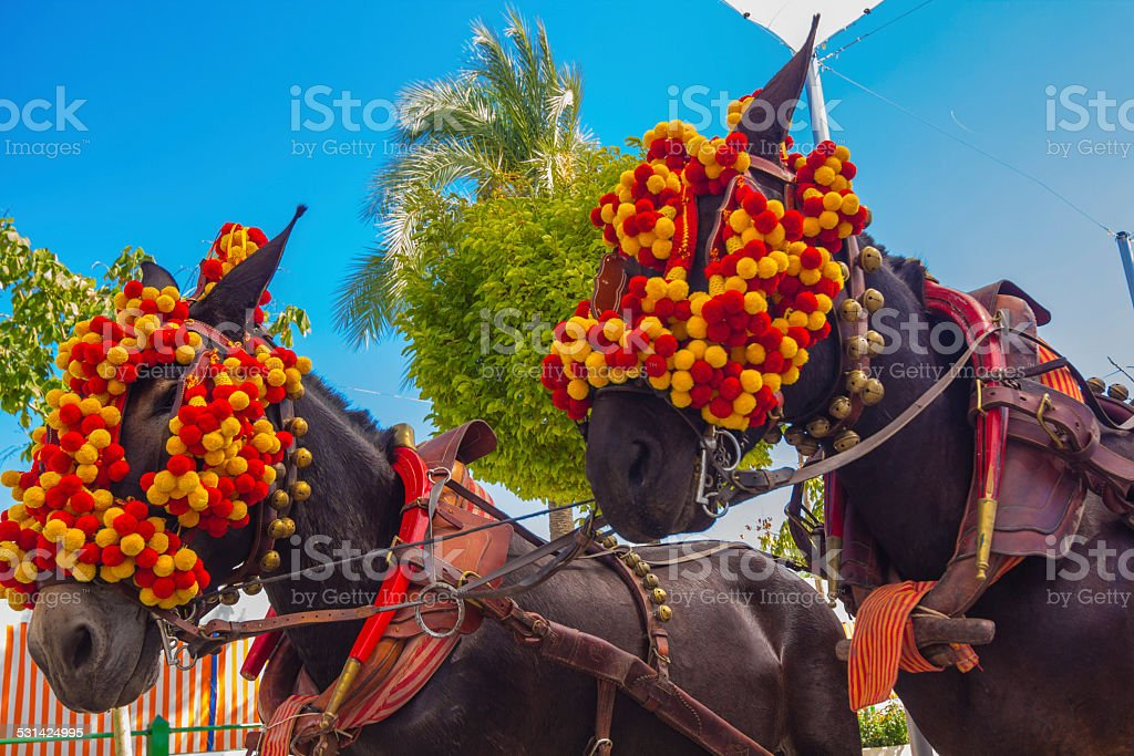 Pretty Horses with colorful ornaments participate in the famous stock photo