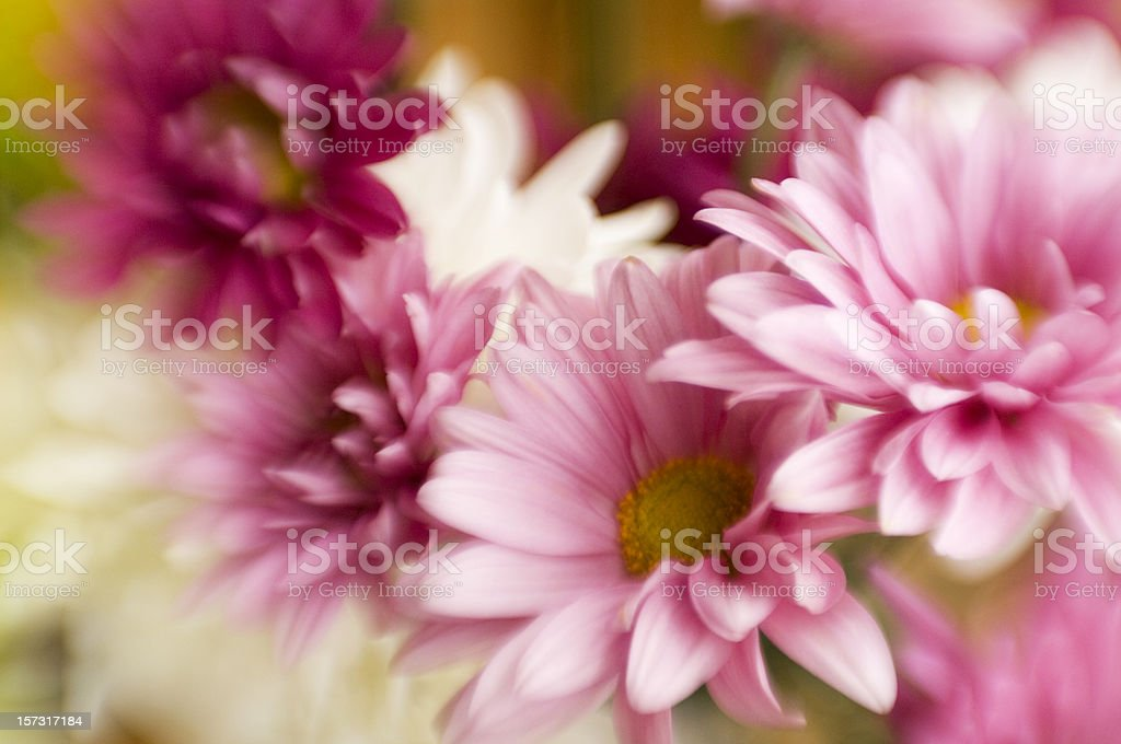 Pretty in Pink Abstract Soft Focus Floral Arrangement stock photo