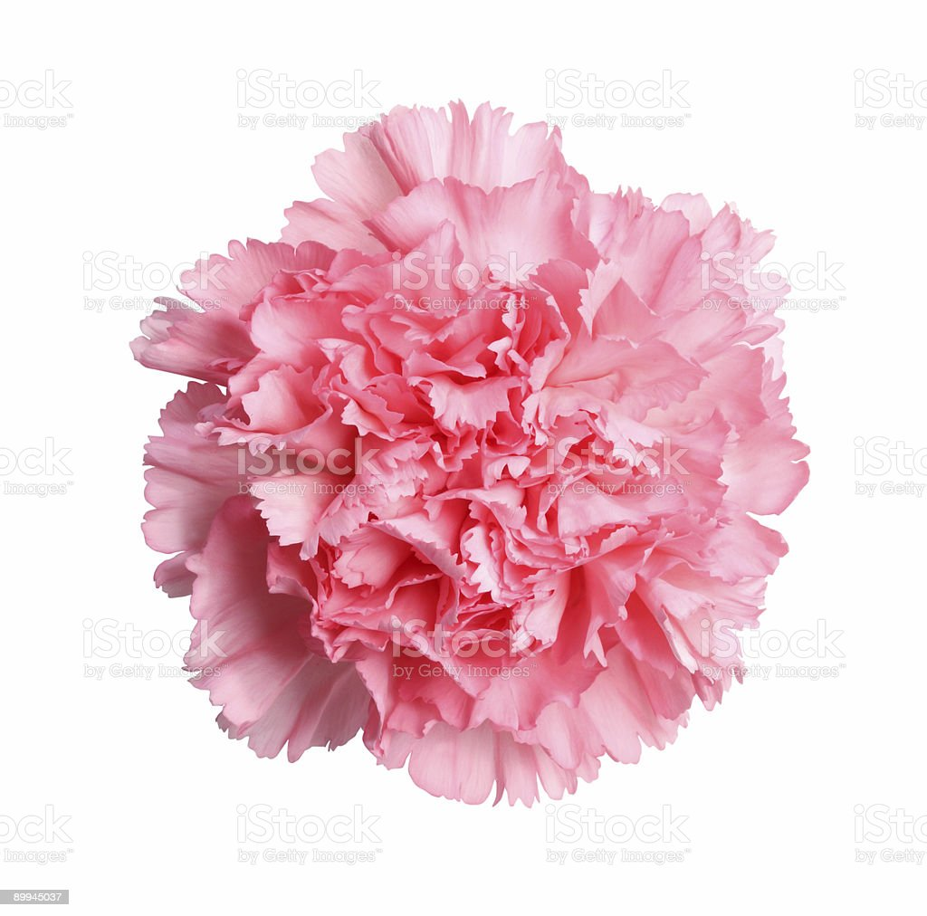 Pretty in pink - with path stock photo