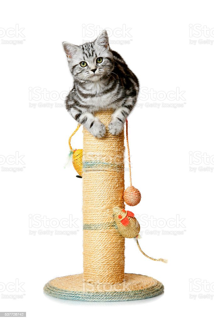 Pretty kitten on a scratching post (isolated on white) stock photo