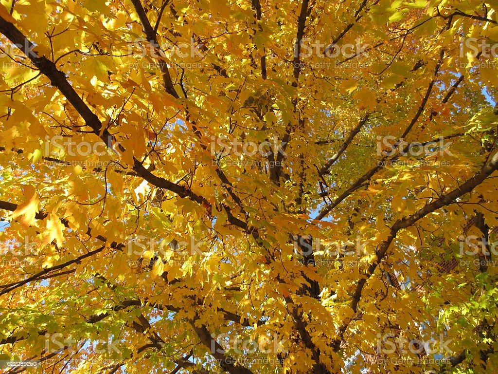 Pretty Orange Leaves stock photo