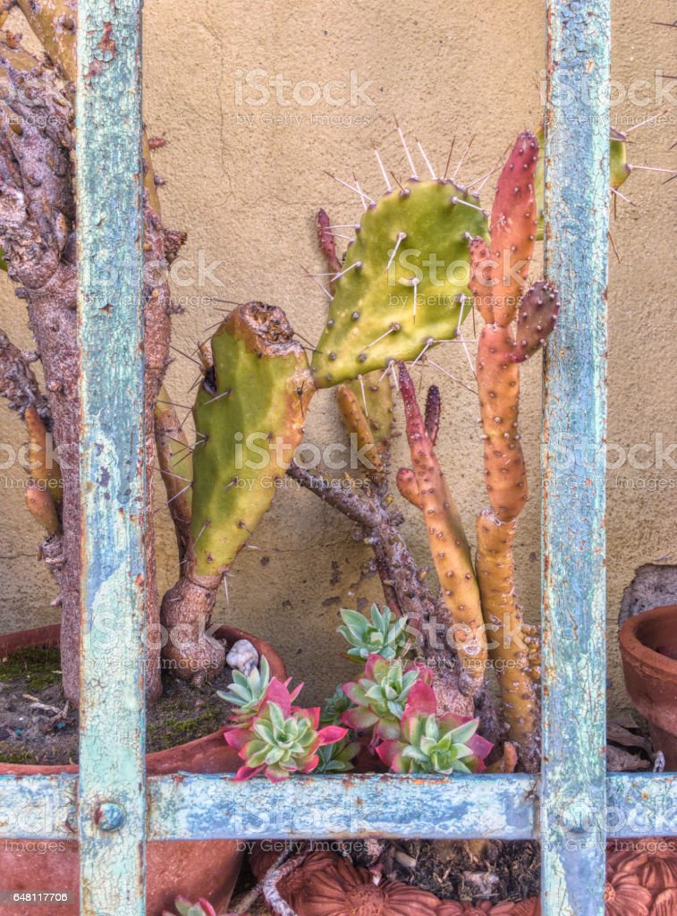 Pretty plant pot behind bars stock photo