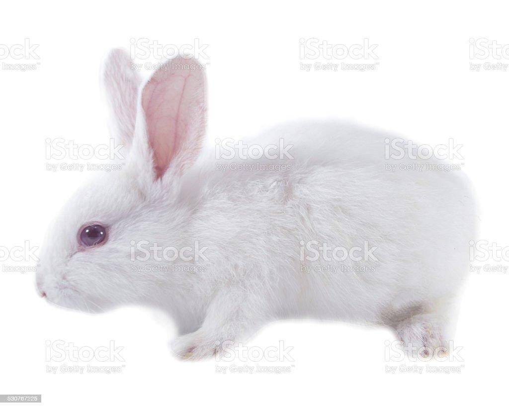 pretty rabbit stock photo