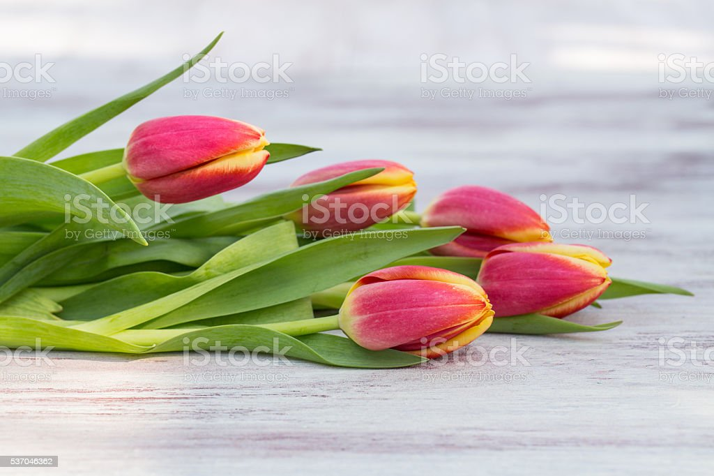 Pretty Spring Tulips Lying on Table stock photo