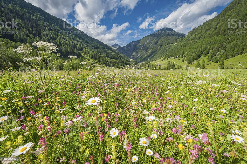 Pretty wildflower meadow idyllic summer Alpine mountain valley stock photo
