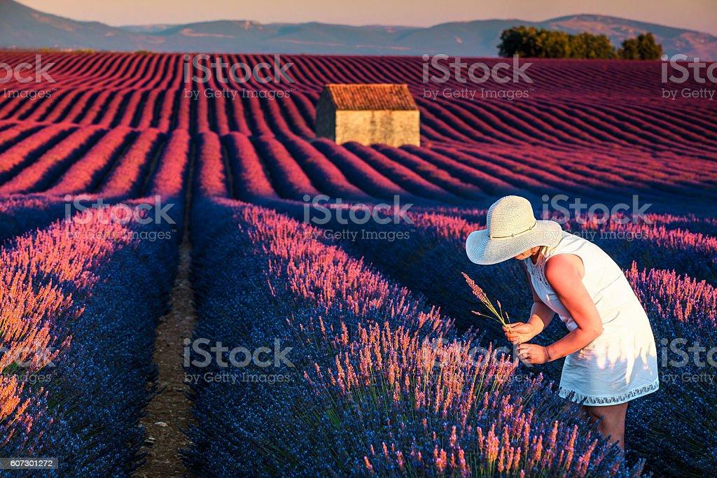 Pretty woman in fields of lavander stock photo