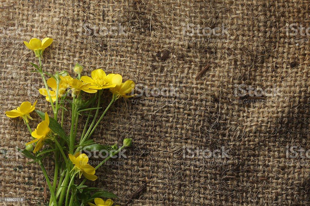 Pretty yellow flowers on burlap royalty-free stock photo