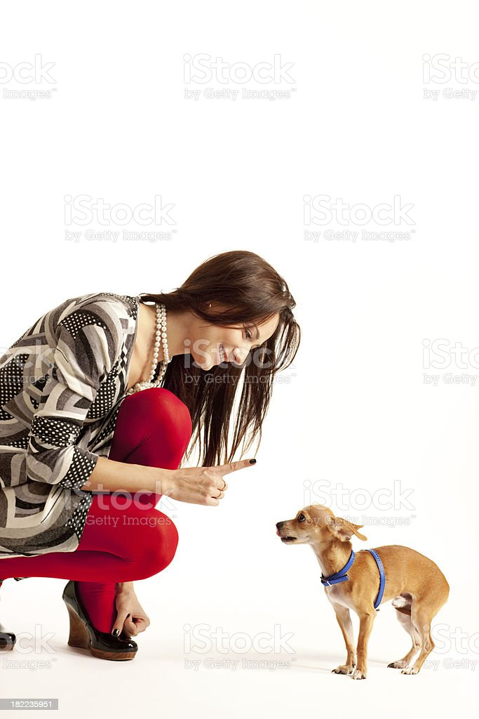 Pretty Young Woman Educating Her Little Chihuahua royalty-free stock photo