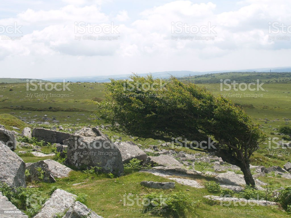 prevailing wind stock photo