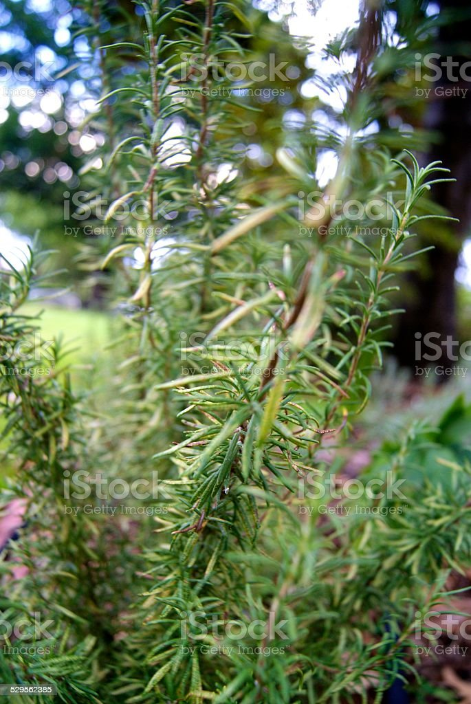 Prickled Green royalty-free stock photo
