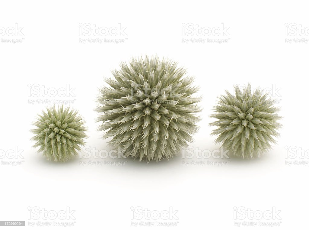 prickly ball stock photo