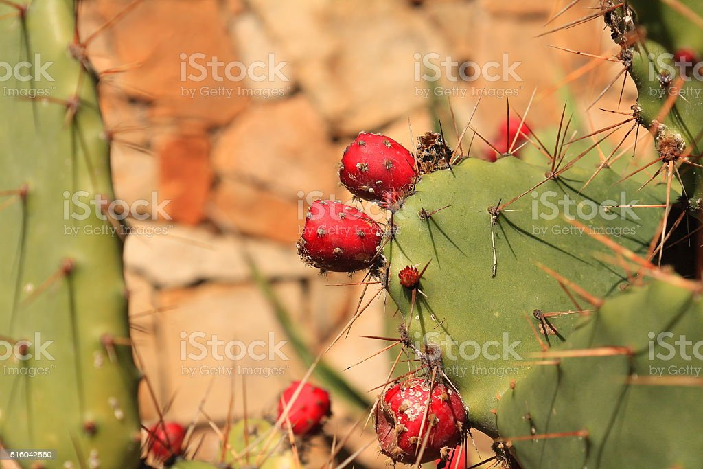 Prickly pear and red cactus pear stock photo