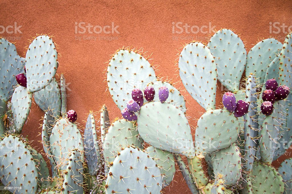 Prickly Pear Cactus Against Brown Adobe Wall stock photo