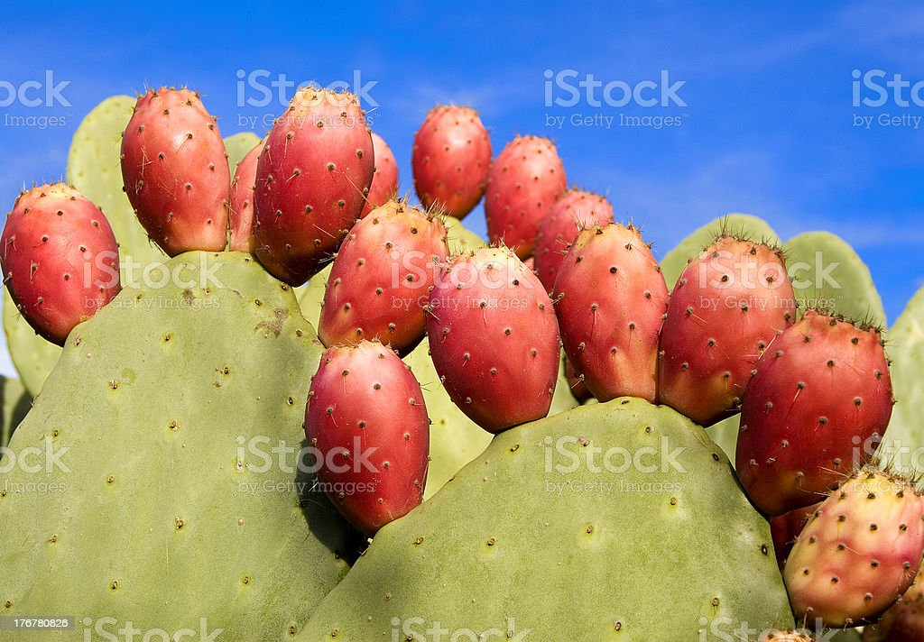 prickly pear tuna royalty-free stock photo
