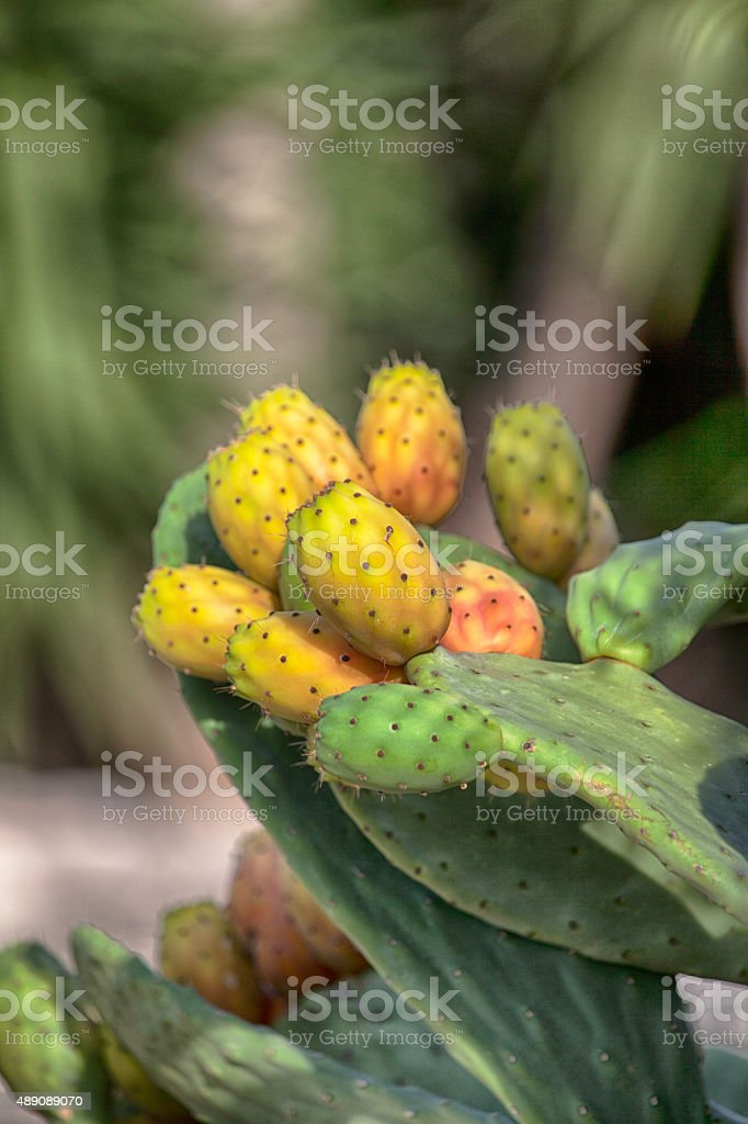 FICHI D'india foto royalty-free