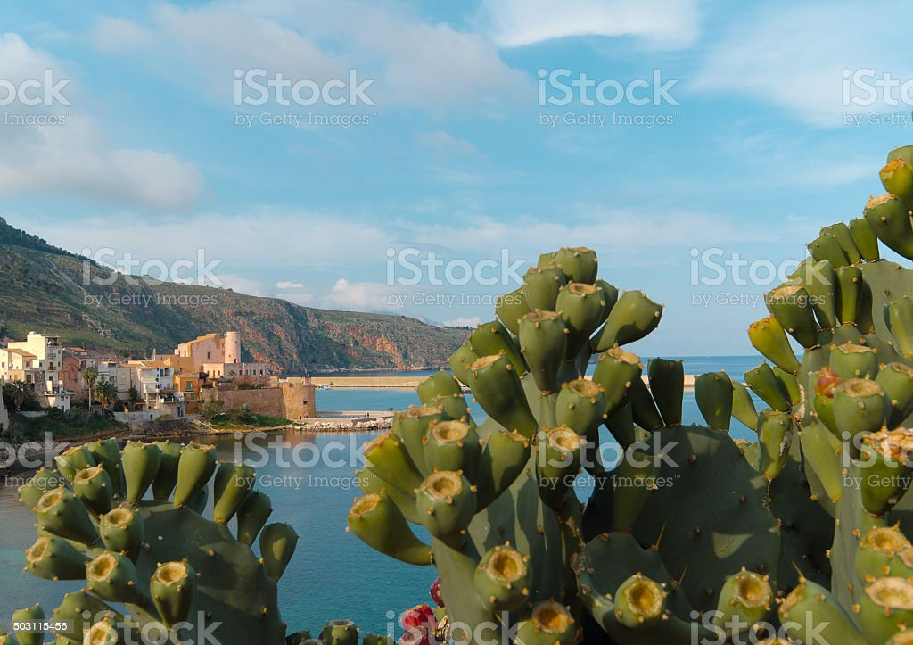 Prickly pears, typical fruit in Sicily stock photo