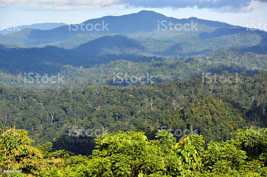 Primary tropical rainforest scenery in Danum Valley, Sabah Borneo stock photo