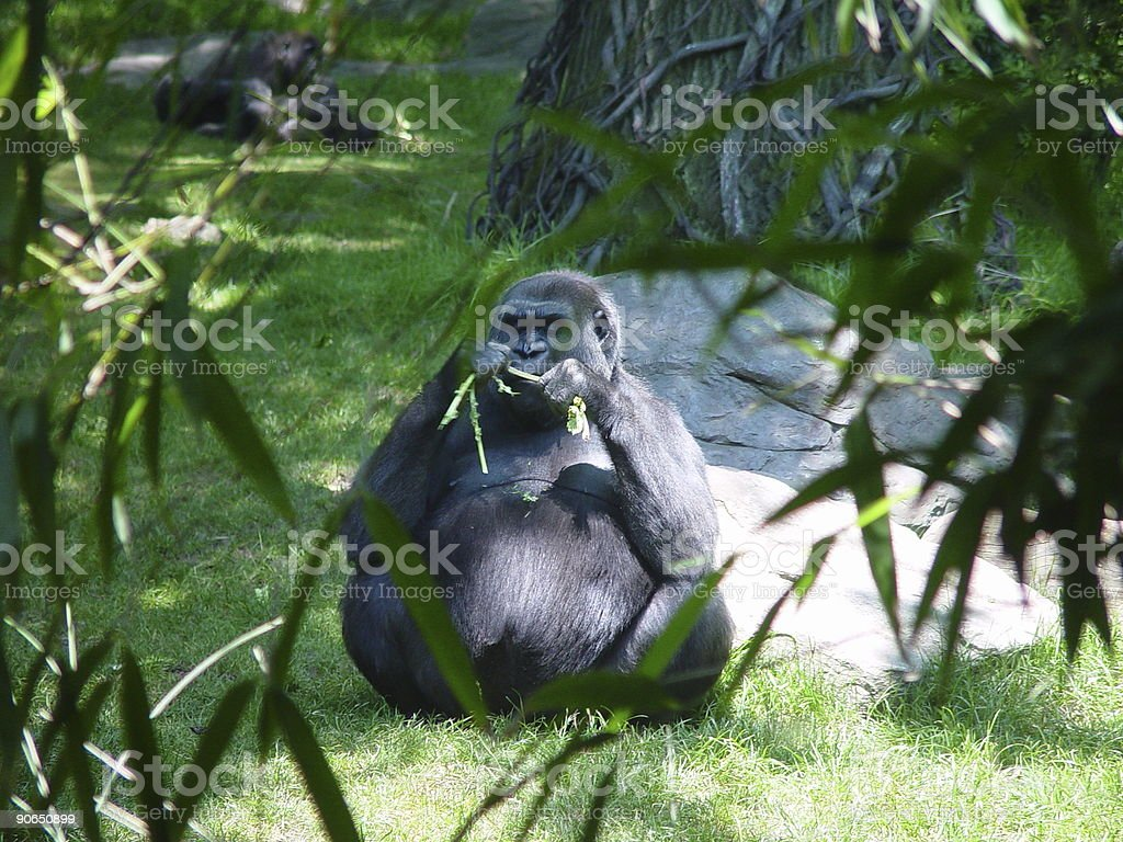 Primate Buddha royalty-free stock photo
