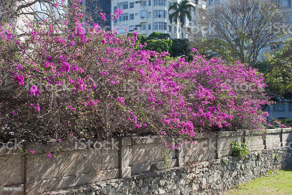 Primavera no Aterro do Flamengo stock photo