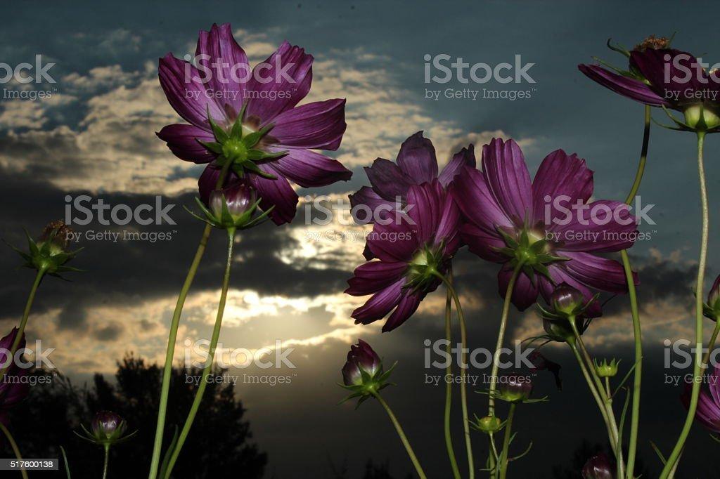 Primavera stock photo