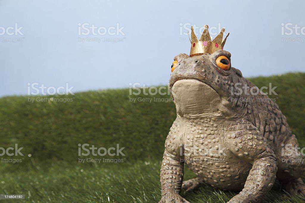 Prince Charming royalty-free stock photo