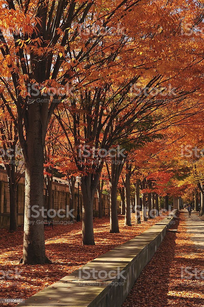 Princeton stock photo