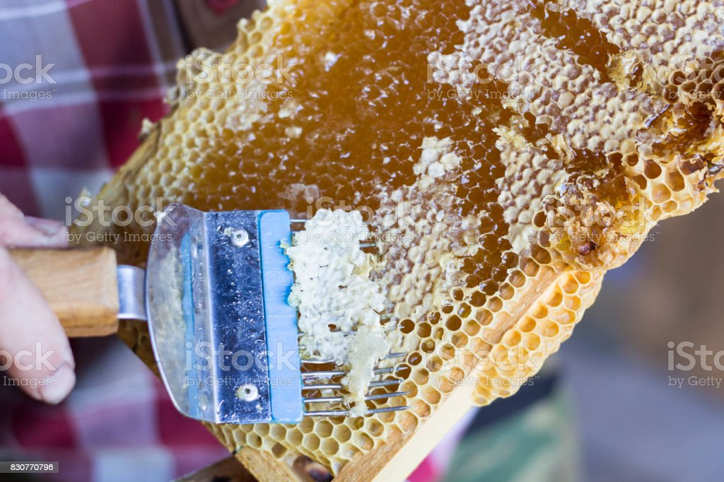 printout of honeycombs, tool for opening honeycombs stock photo