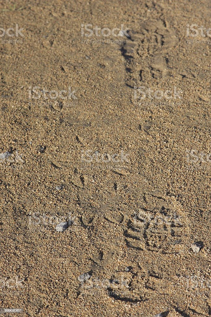 Prints in the Sand stock photo
